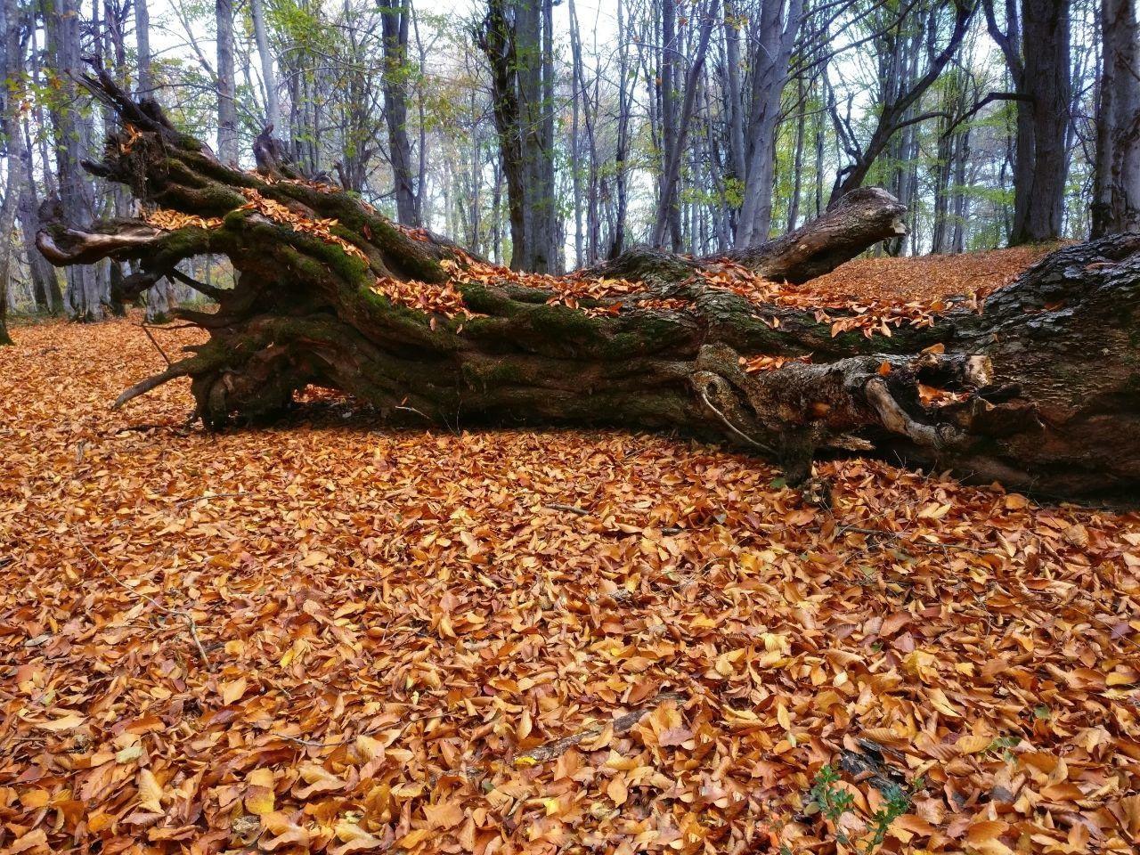 جنگل پاییزی الیمستان