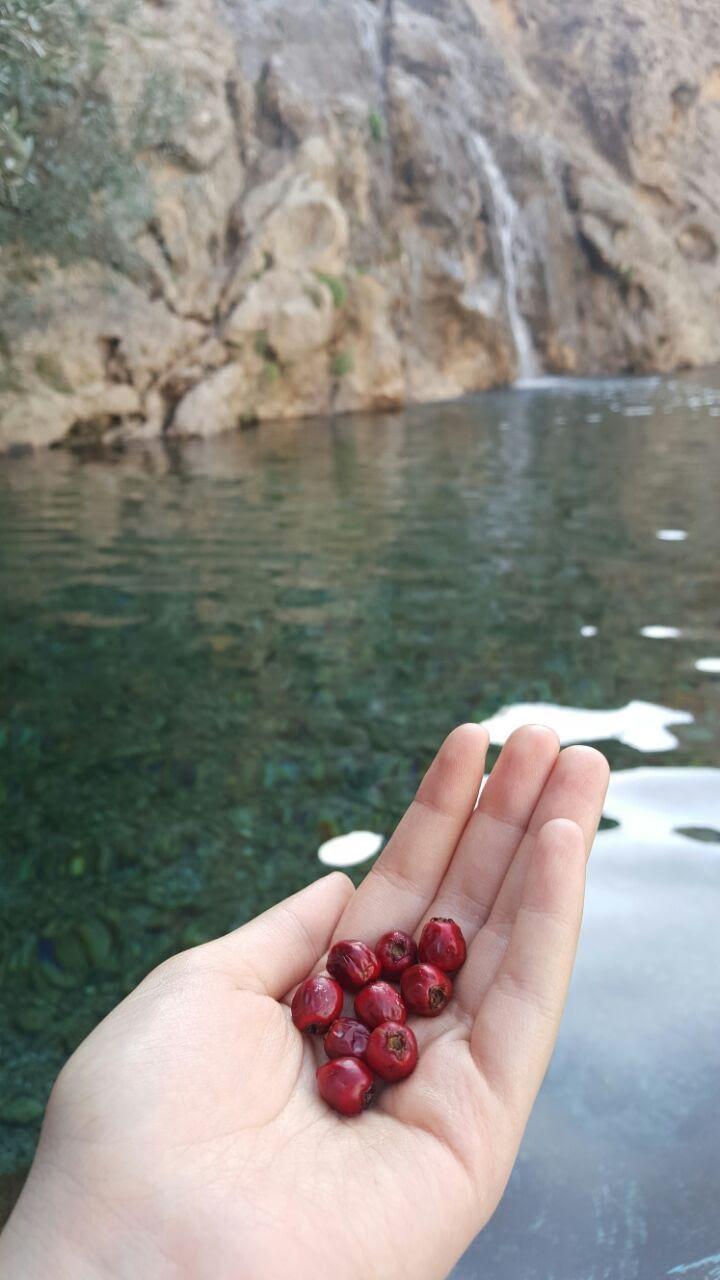 چشمه آب طبیعی
